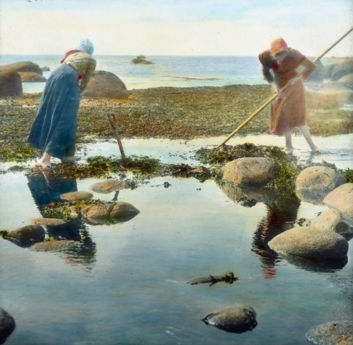 Two women collecting seaweed to be used as fooder for the domestic animals. The location is Lista, Farsund, Agder, Norway. Hand-coloured photo - taken in 1912. | Photo: Anders Beer Wilse - digitaltmuseum.no DEX_W_00564 - cc by.