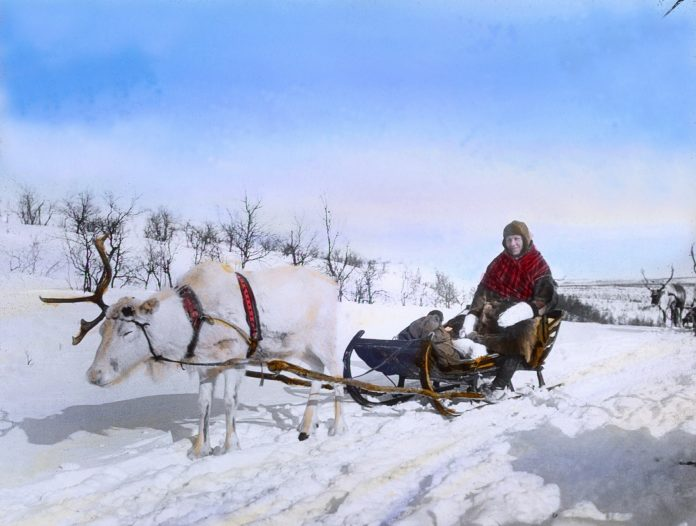Karen V travelling with her reindeer. Finnmark, Norway. Hand-coloured photo. | Photo: Alf Schrøder co - digitaltmuseum.no FBib.01005-062 - Public domain.