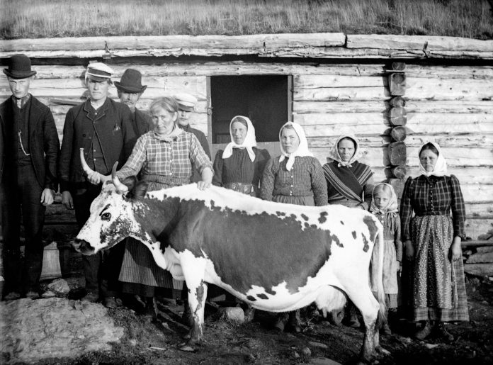 A group of people visiting a milkmaid and one of her cows at summer pasture - around 1900. A Sunday visit maybe? The location is Ringsaker, Hedmark, Norway. | Photo: Ole Hansen Løken - digitaltmuseum.no HHB-01745 - public domain.