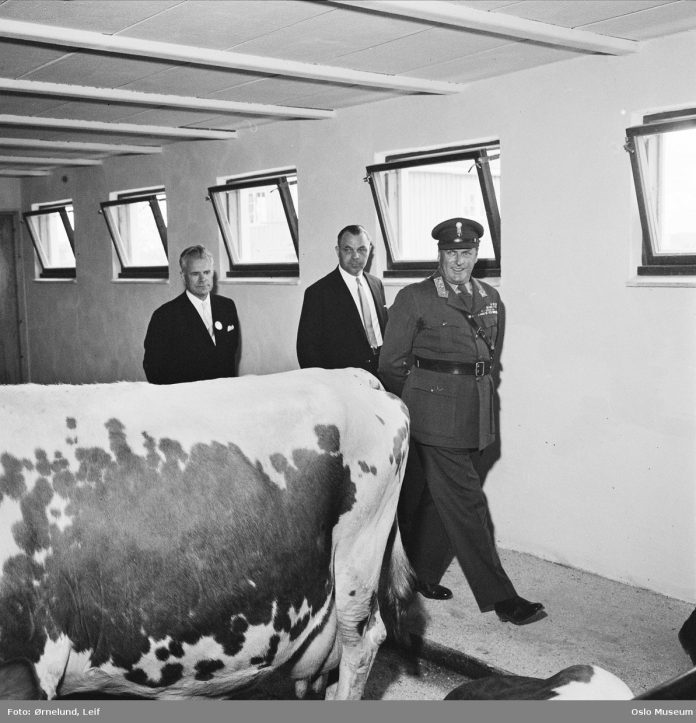 King Olav V of Norway inspecting the cows. Ekeberg, Oslo in 1959. | Photo: Leif Ørnelund - digitaltmuseum.no OB.Ø59_1527b - CC BY-SA.