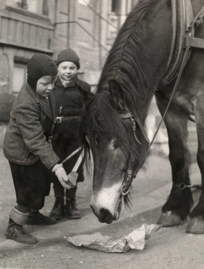 Two young boys feeding a Norwegian Dole horse in 1950. | Photo: unknown - digitaltmuseum.no OB.FS0285 - CC BY-SA.