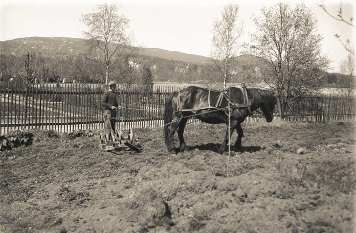 A man and his Norwegian Dole horse are preparing the soil in early spring. The location is Volvat, Oslo, Norway - and the date is 17 May 1940. Norway has only recently been invaded by German forces. It is presumably the hill of Holmenkollen in the background. | Photo: Esther Langberg - digitaltmuseum.no OB.Z16621 - cc by-sa.